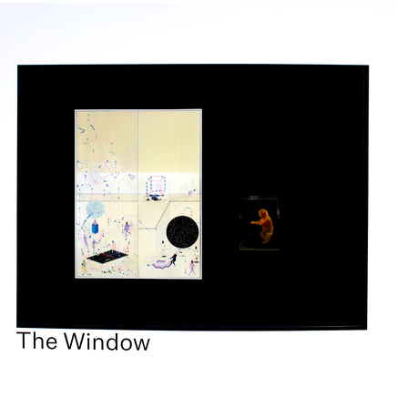 What's in The Window